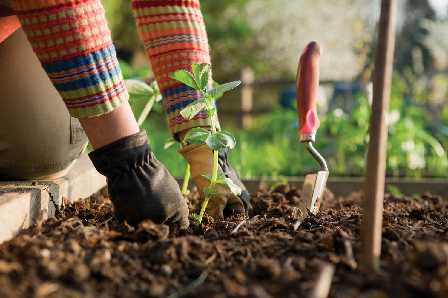 5 Tips to Achieve a Healthy Lawn