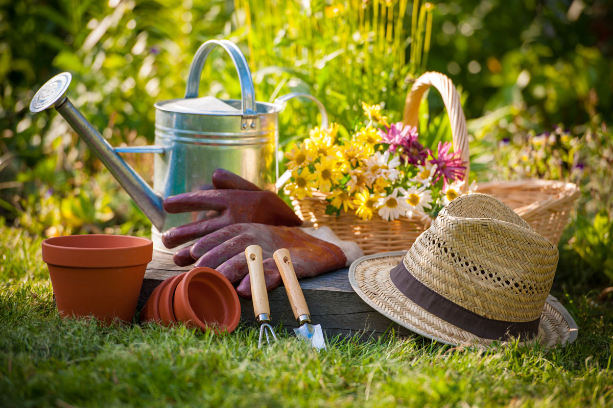 8 Reasons Every Plant Expert in UK Will Tell You to Take Up Gardening