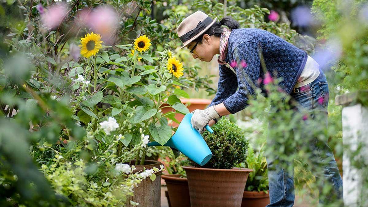 Local Matters Choosing The Right Garden Centre Near Me