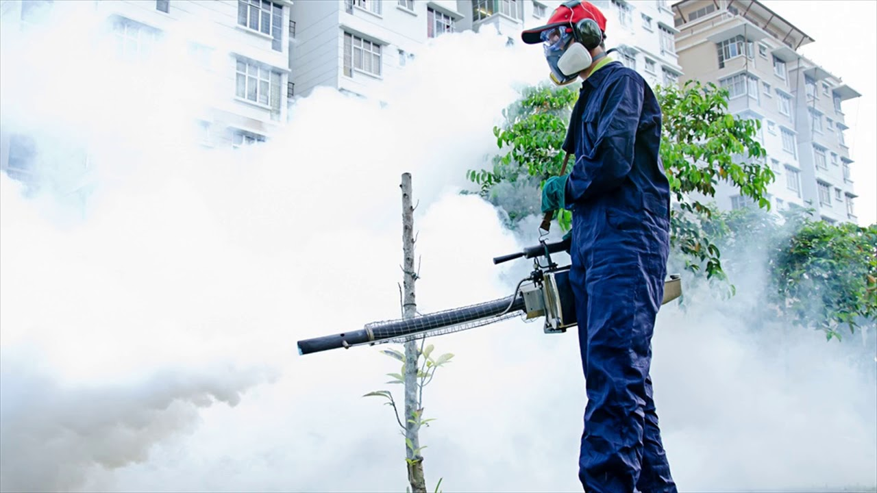 Opt For The Ultimate Building And Pest Inspection Gold Coast