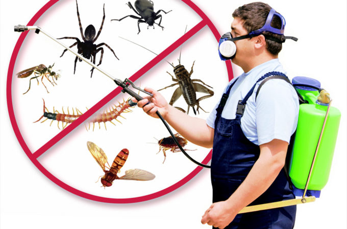 What's Pure Mosquito Management?