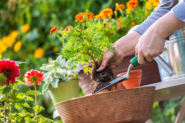 The common gardening mistakes to avoid for your yard